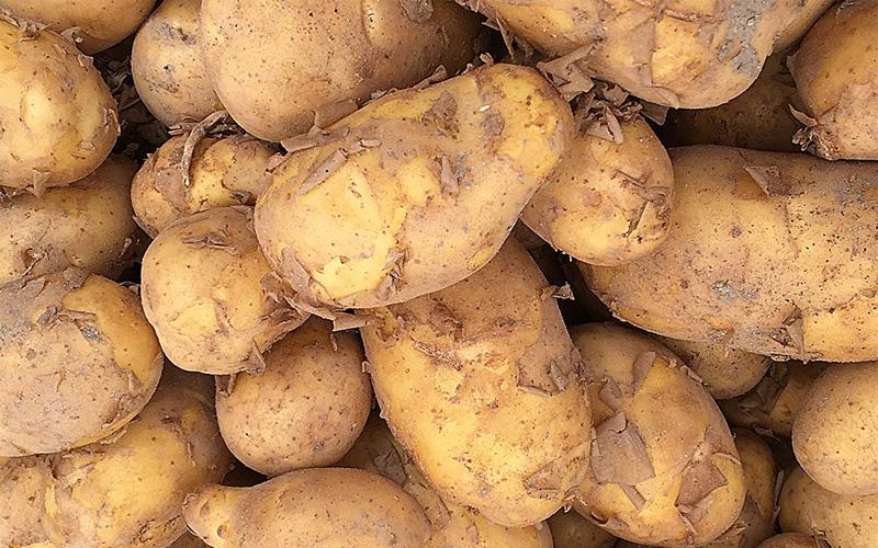 ضبط مبيداتٍ غير مسموحٍ بها في أطنان من البطاطس
